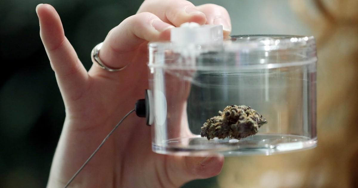 Можно ли после операции курить марихуану пустоцвет конопли как определить